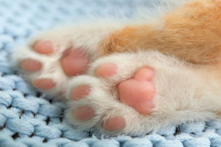 Little red kitten on light blue blanket, closeup view of paws