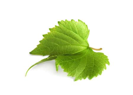 Fresh green grape leaf on white background Archivio Fotografico - 130134193