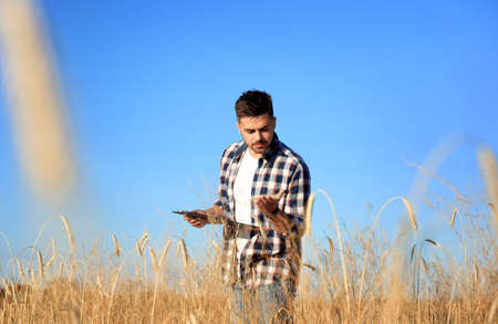 Agronomist with clipboard in wheat field. Cereal grain crop
