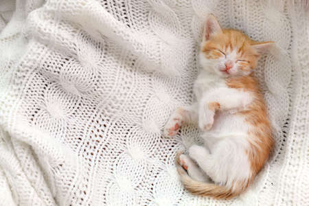 Cute little kitten sleeping on white knitted blanket, top view. Space for text