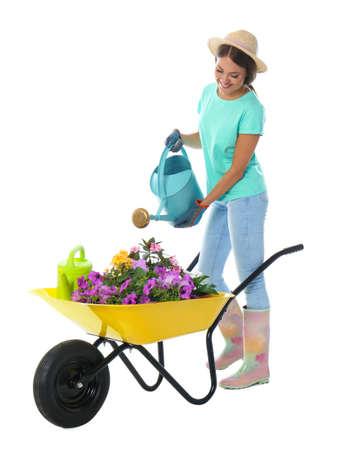 在白色背景的独轮车的女性花匠浇灌的植物