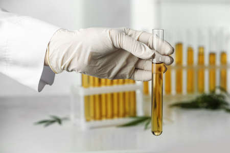 Doctor holding test tube with urine sample for hemp analysis over table, closeup Reklamní fotografie - 131136802