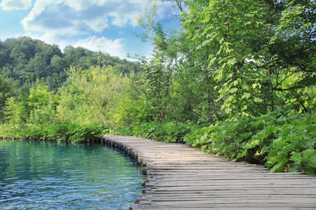 Wooden bridge over river and beautiful view of forest