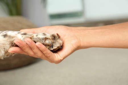 Mujer sosteniendo la pata de perro en el interior, vista de cerca
