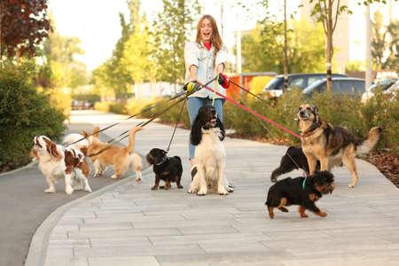Jeune femme marchant d'adorables chiens dans le parc