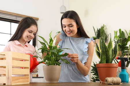 Mother and daughter taking care of plant at home