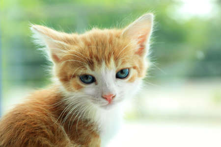 Cute little red kitten on blurred background, closeup view. Space for text