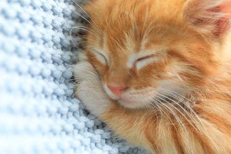 Sleeping cute little red kitten on light blue blanket, closeup view Stock Photo