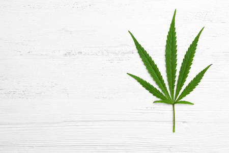 Leaf of medical hemp on white wooden background, top view. Space for text