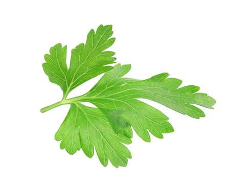 Fresh aromatic green parsley on white background Stock Photo