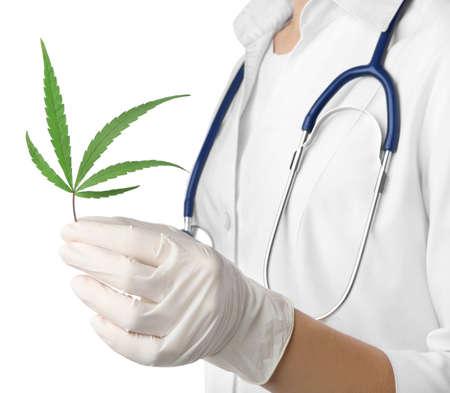 Doctor holding leaf of medical hemp on white background, closeup