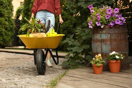 Female gardener with wheelbarrow and plants outdoors, closeup
