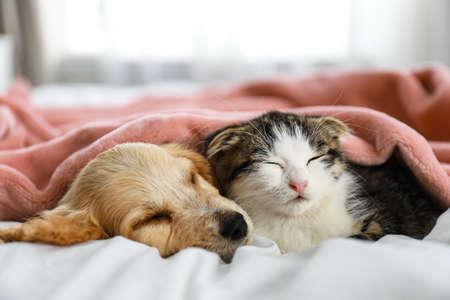 Adorable little kitten and puppy sleeping on bed indoors Foto de archivo