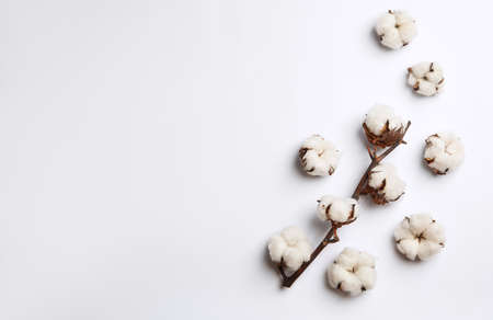 Composition with cotton flowers on white background, top view