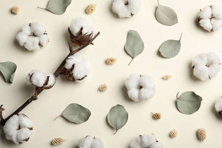 Flat lay composition with cotton flowers on beige background