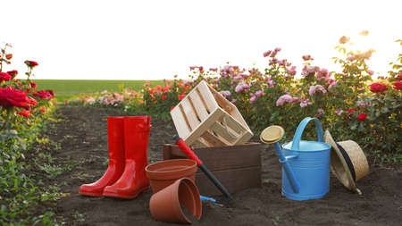 Straw hat, rubber boots, gardening tools and equipment near rose bushes outdoors