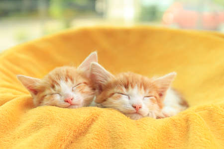 Cute little kittens sleeping on yellow blanket Foto de archivo