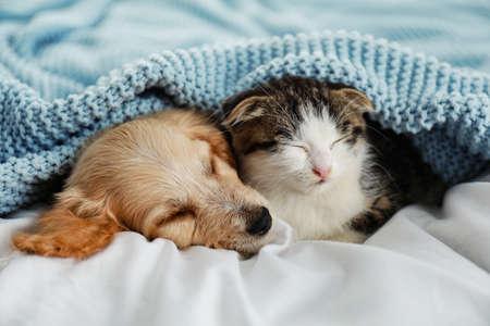 Adorable gatito y cachorro durmiendo en la cama Foto de archivo