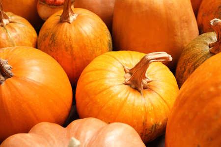 Many fresh raw whole pumpkins as background, closeup. Holiday decoration
