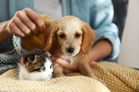 Owner with adorable little kitten and puppy, closeup Imagens
