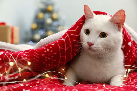 Cute white cat under blanket on bed in room decorated for Christmas, space for text. Cozy winter