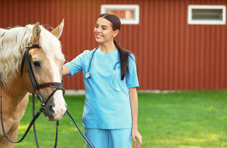 Young veterinarian with palomino horse outdoors on sunny day Banque d'images