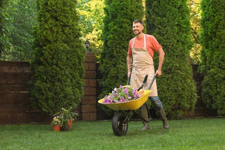Happy man with wheelbarrow working in garden