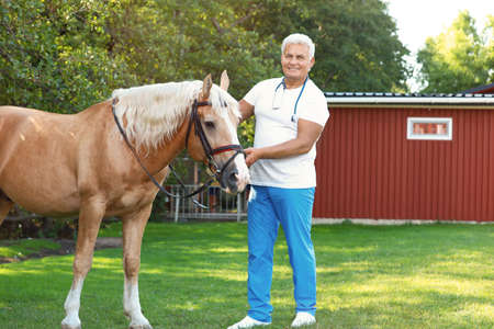 Senior veterinarian with palomino horse outdoors on sunny day
