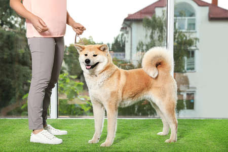 Young woman and adorable Akita Inu dog indoors. Champion training Stok Fotoğraf - 132041369
