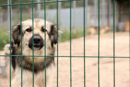 Homeless dog in cage at animal shelter outdoors. Concept of volunteering