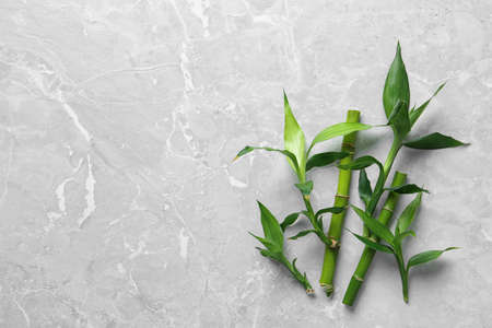Green bamboo stems on grey background, top view. Space for text