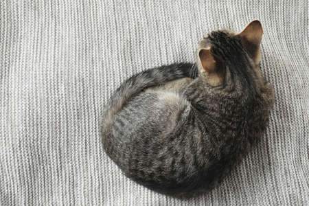Grey tabby cat lying on knitted blanket, top view with space for text. Adorable pet Reklamní fotografie