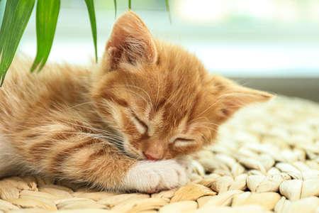 Cute little red kitten sleeping on wicker mat, closeup Stok Fotoğraf