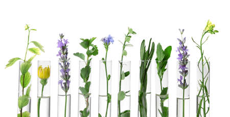 Different plants in test tubes on white background