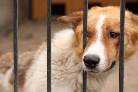 Homeless dog in cage at animal shelter outdoors. Concept of volunteering Banco de Imagens