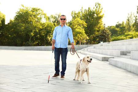 Mature blind person with white walking cane and guide dog near stone stairs