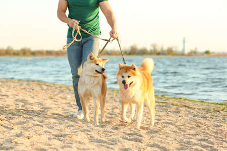 Young man walking his adorable Akita Inu dogs near river Banque d'images