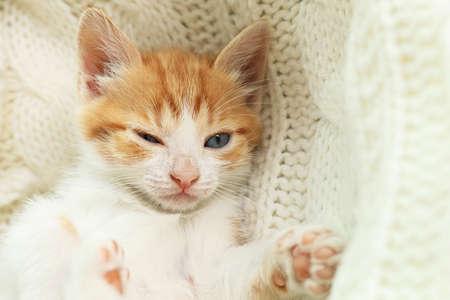 Cute sleepy little red kitten on white knitted blanket, closeup view