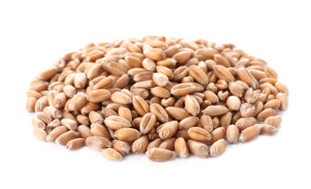 Pile of wheat grains on white background. Cereal crop
