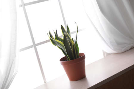 Houseplant on window sill. Home decor element