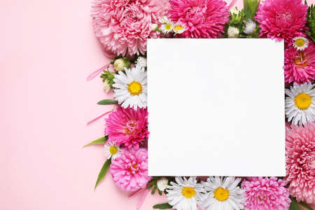 Flat lay composition with beautiful aster flowers and blank card on pink background. Space for text Stock Photo