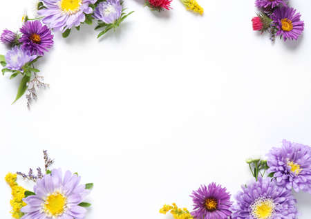 Composition with beautiful aster flowers on white background, top view. Space for text