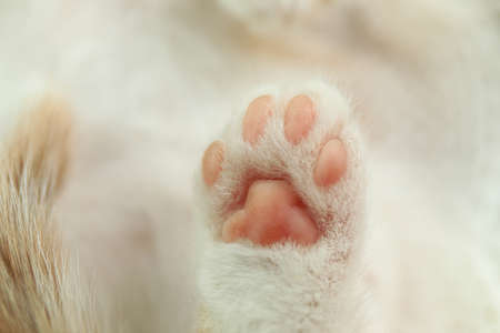 Cute little kitten, closeup view of paw Stock Photo