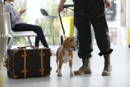 Officer with dog near suitcase in airport, closeup