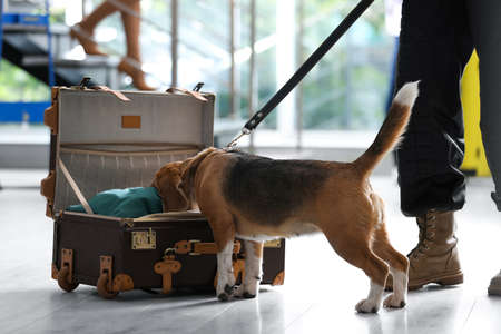 Officer with dog looking for drugs near open suitcase in airport, closeup
