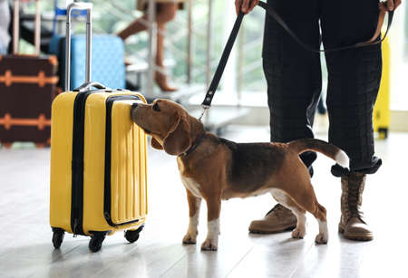Officer with dog checking suitcase in airport, closeup. Luggage inspection Archivio Fotografico - 132296763