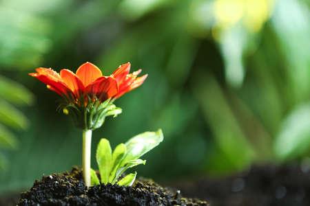 在肥沃土壤的鲜花在雨下,文本的空间