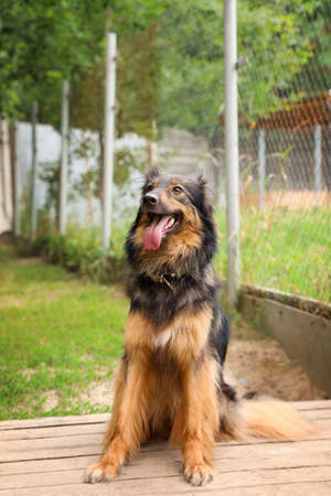 Homeless dog at animal shelter outdoors. Concept of volunteering