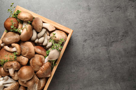 Different wild mushrooms in wooden crate on grey background, top view. Space for text