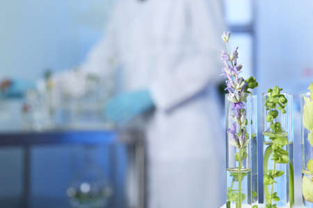 Test tubes with different plants in laboratory, closeup. Space for text